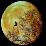 سحر القمر14
