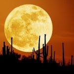 سحر القمر15