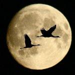 سحر القمر1