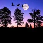 سحر القمر6