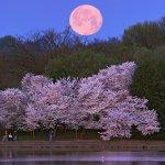 سحر القمر9