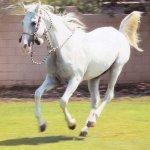 خيل عربية Size:35.00 Kb Dim: 600 x 613