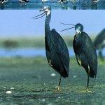 الطيور البحرية Size:43.90 Kb Dim: 400 x 523