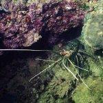 الحياة البحرية Size:50.20 Kb Dim: 627 x 469