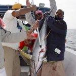 الصيد برأس الحد Size:45.40 Kb Dim: 700 x 525