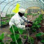 الزراعة الحديثة Size:187.40 Kb Dim: 500 x 761