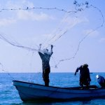 صيد الأسماك Size:37.00 Kb Dim: 500 x 327