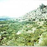 الجبل الأخضر Size:170.70 Kb Dim: 1200 x 818
