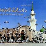 سور قرآنية3