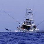 سباق صيد السمك