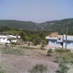 قرية طارق أسد