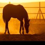 خيول Size:249.80 Kb Dim: 700 x 500