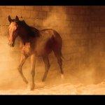 خيول Size:363.60 Kb Dim: 769 x 541