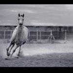 خيول Size:214.20 Kb Dim: 755 x 531