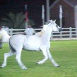 حصان Size:27.30 Kb Dim: 521 x 421