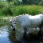 حصان Size:97.20 Kb Dim: 774 x 564