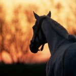 حصان Size:33.40 Kb Dim: 640 x 426