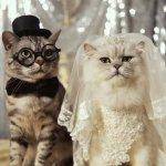 قطط Size:64.00 Kb Dim: 476 x 480