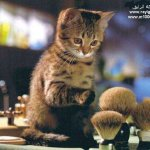 cat Size:38.70 Kb Dim: 600 x 508