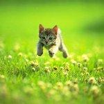 قطة Size:34.60 Kb Dim: 640 x 480