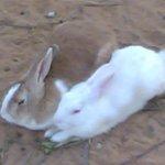 ارنب Size:66.60 Kb Dim: 1280 x 960