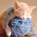 قطة Size:46.90 Kb Dim: 613 x 511