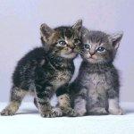 قطتان