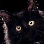 قطة سوداء