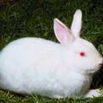 ارنب Size:33.90 Kb Dim: 640 x 427