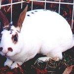 ارنب Size:52.00 Kb Dim: 584 x 431