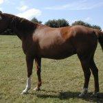 حصان Size:181.00 Kb Dim: 800 x 634