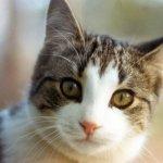 قطه Size:60.00 Kb Dim: 600 x 426