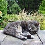 Cat Size:153.40 Kb Dim: 1024 x 768