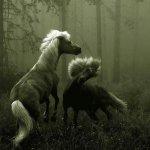 الحيوانات الأليفة8