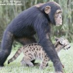 الحيوانات الأليفة1