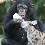 الحيوانات الأليفة3