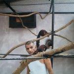 بحريني يربي حيوانات في بيته1