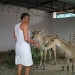 بحريني يربي حيوانات في بيته2