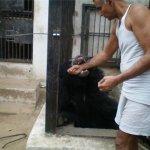 بحريني يربي حيوانات في بيته4