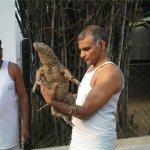 بحريني يربي حيوانات في بيته9
