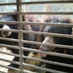 بحريني يربي حيوانات في بيته12