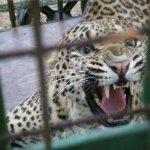بحريني يربي حيوانات في بيته15