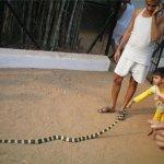 بحريني يربي حيوانات في بيته3