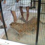 بحريني يربي حيوانات في بيته8