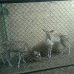 الحيوانات الأليفة2