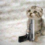 قطط11