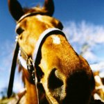 أسمي حصان