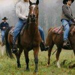 خيول الكاوبوي