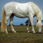 حصان ابيض Size:72.20 Kb Dim: 640 x 423