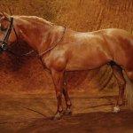 حصان Size:93.60 Kb Dim: 800 x 600